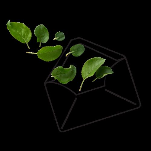 EcoEmbassy Newsletter