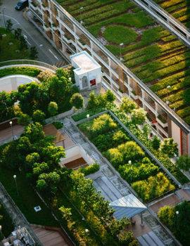Grüne Gärten und Häuser